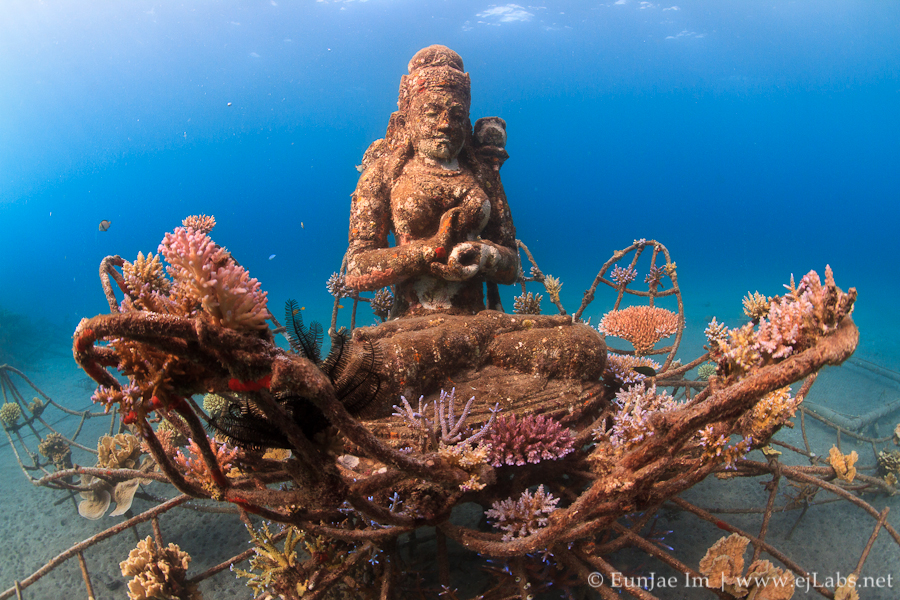 Bali May 2012