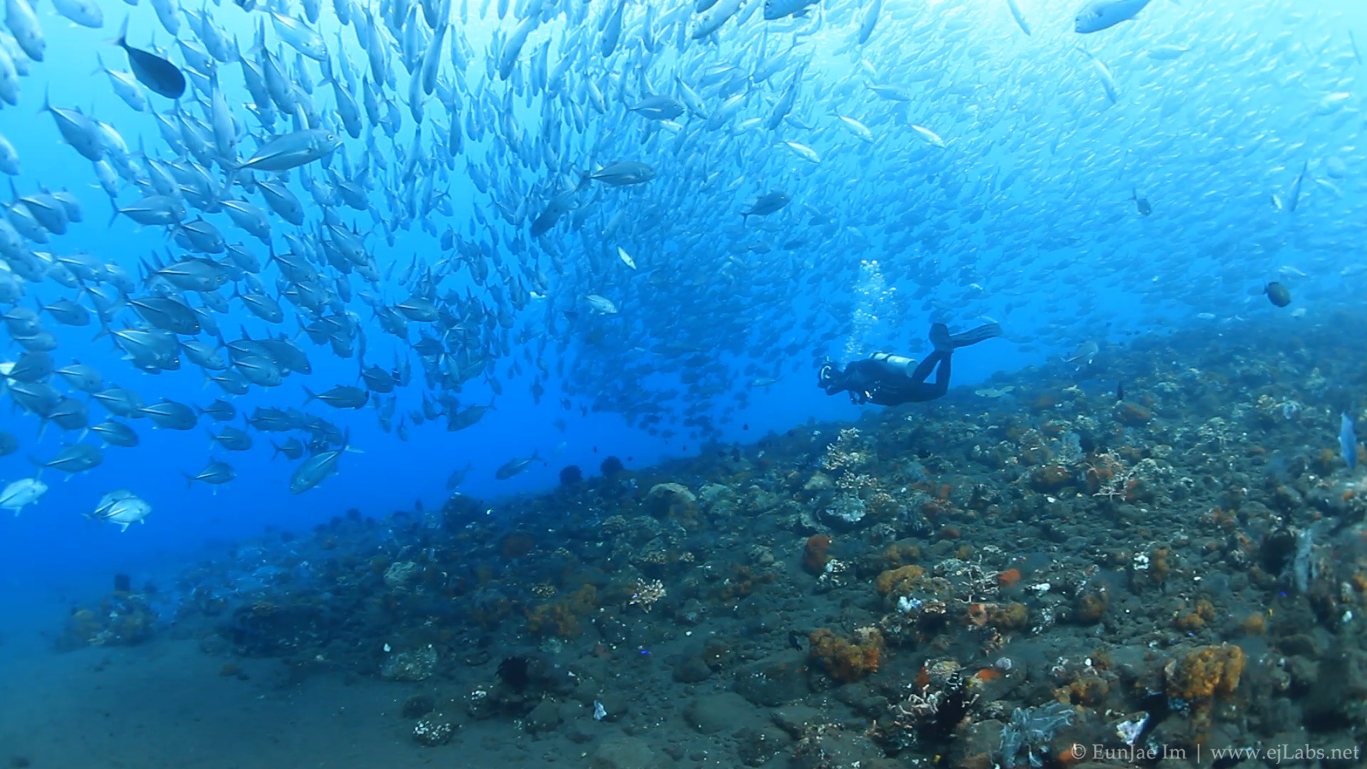 School of jacks in Tulamben, Bali