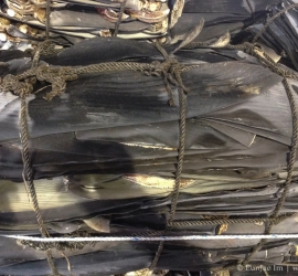 Dried shark fin in shipping container which just arrived in Busan port from Hong Kong