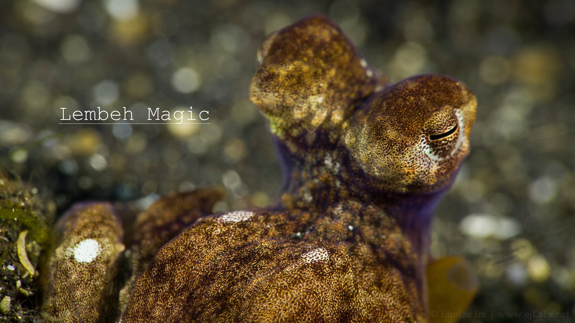 Lembeh Magic