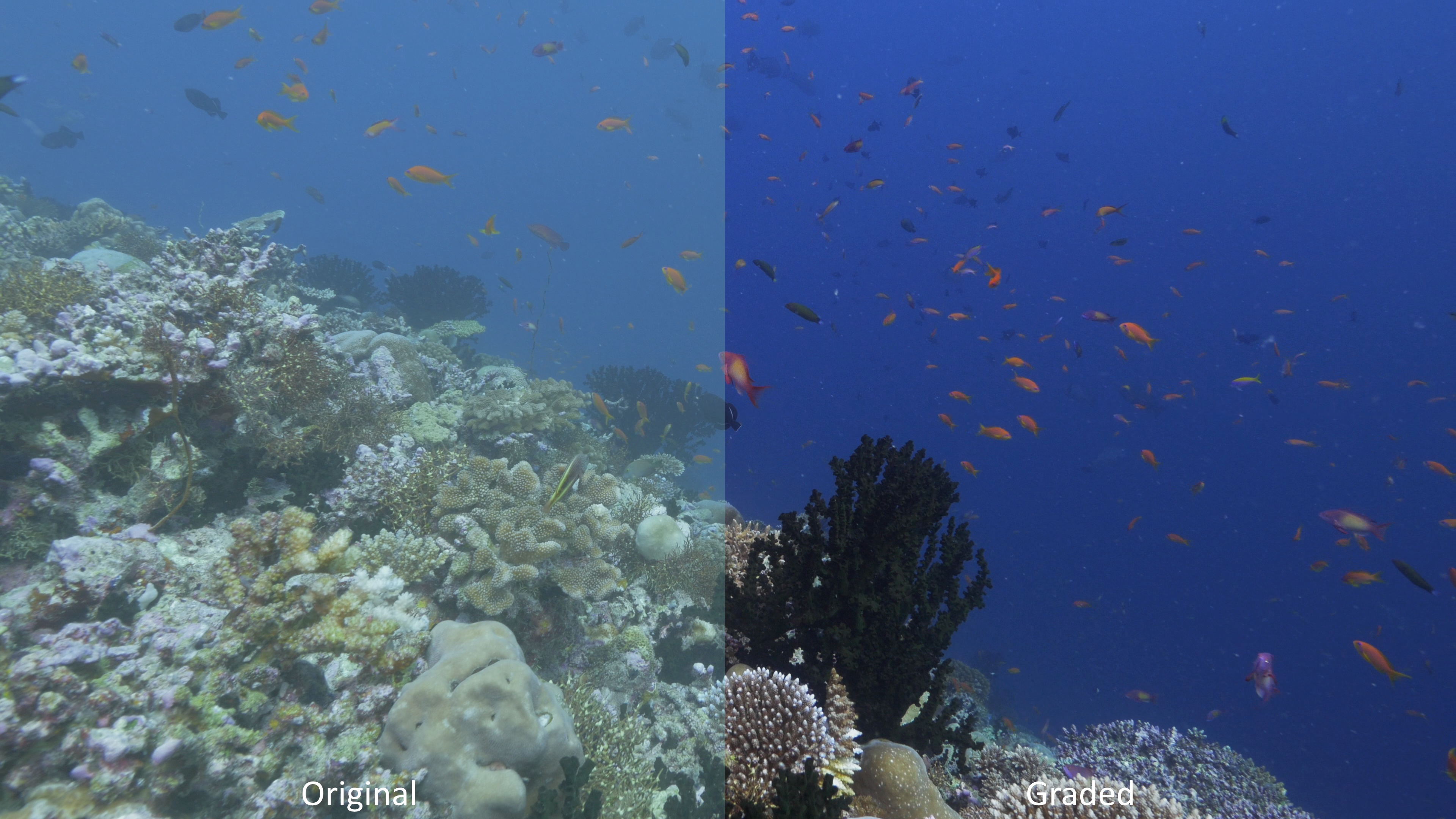 Panasonic GH4 Underwater Test Footage – Graded & Ungraded
