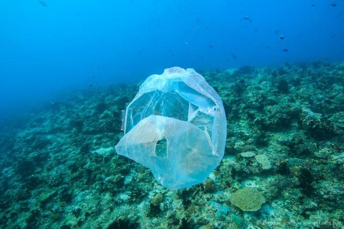 바다를 떠나니는 이런 쓰레기는 거북이에게 해파리 즉, 먹이감으로 보입니다. 이런 플라스틱 쓰레기는 거북이 뿐만 아니라 돌고래와 고래도 죽입니다.