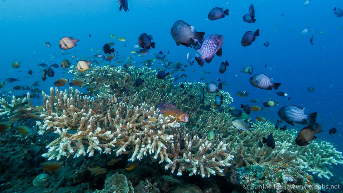 Underwater 4K lock shot