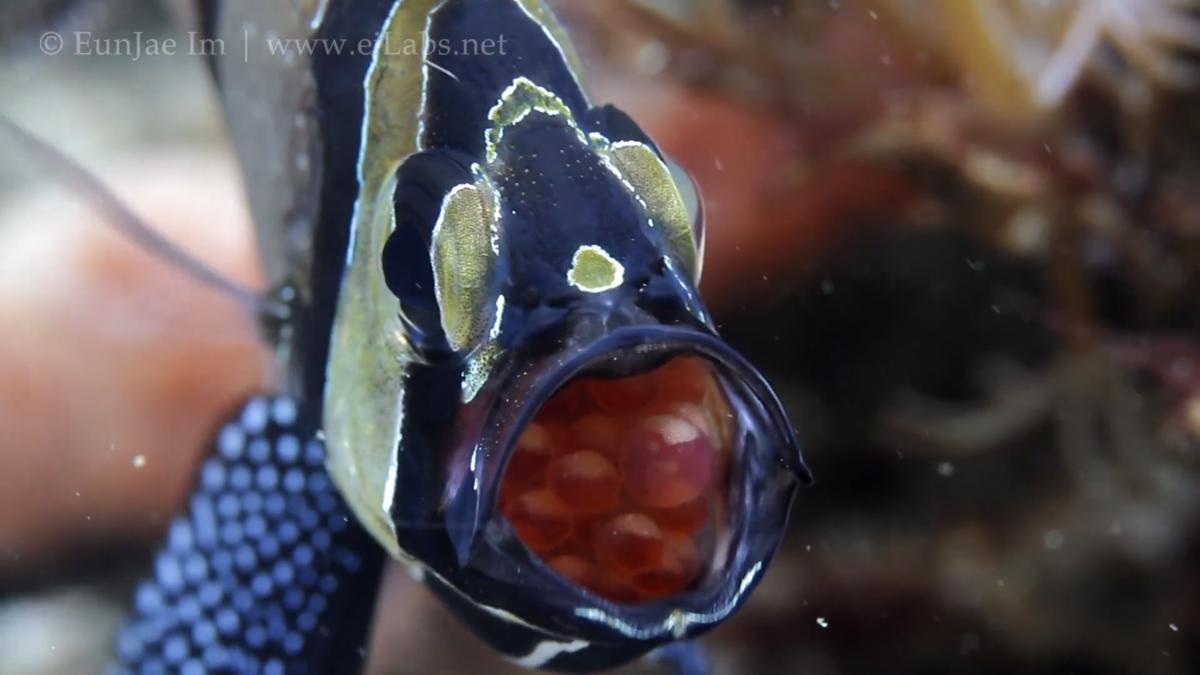 Underwater Footage Showreel