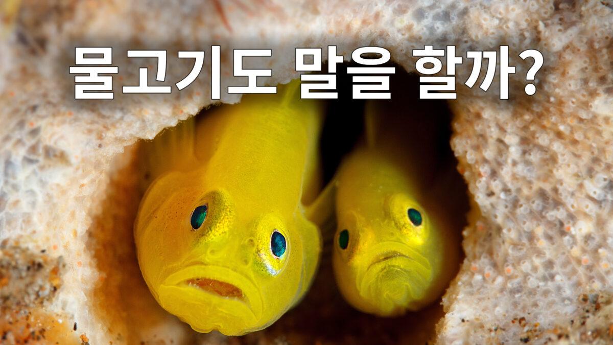 물고기도 말을 할까?